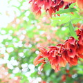 写真: 夏!!