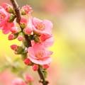 写真: 菜の花と~~
