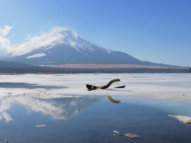 写真: 山中湖の主?なのか。