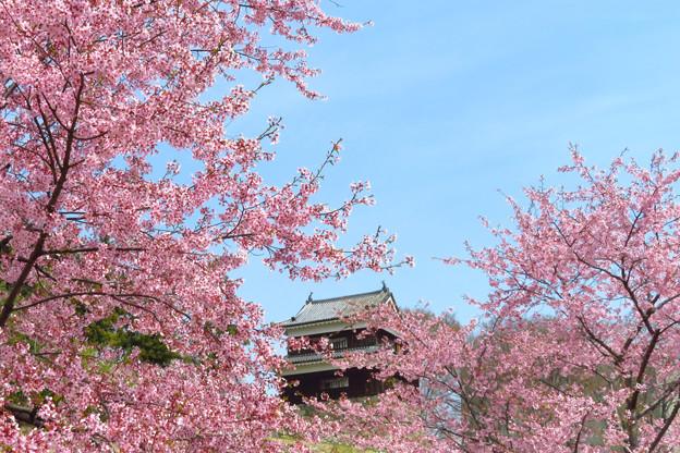 桜の向こうの櫓。