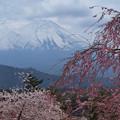 写真: しだれ桜と怪しい雲行き。