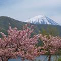 写真: まだ残る八重桜。