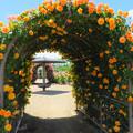 写真: バラのアーチを覗いてみれば。