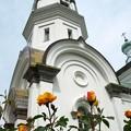 教会のバラ。