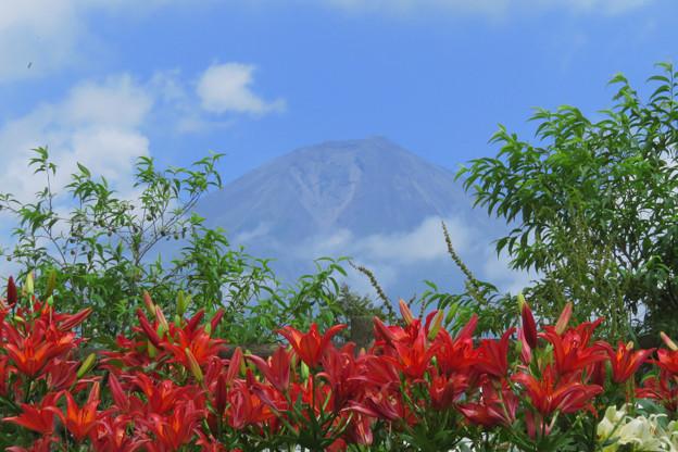 山開きの日にユリの咲きたる。