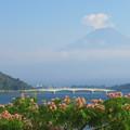 写真: 合歓の木と大橋。