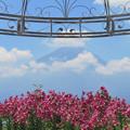 ガゼボのゆりの花。