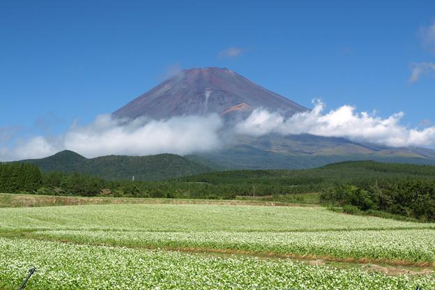 そば畑と横切る雲。
