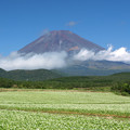 Photos: そば畑と横切る雲。