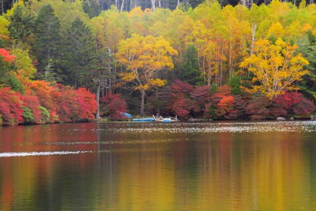 白駒の池、黄金に色づく。