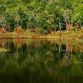 写真: 静かな一沼。