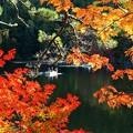 写真: 家族で楽しむ秋。