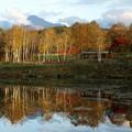 写真: 池のほとりの黄金色。