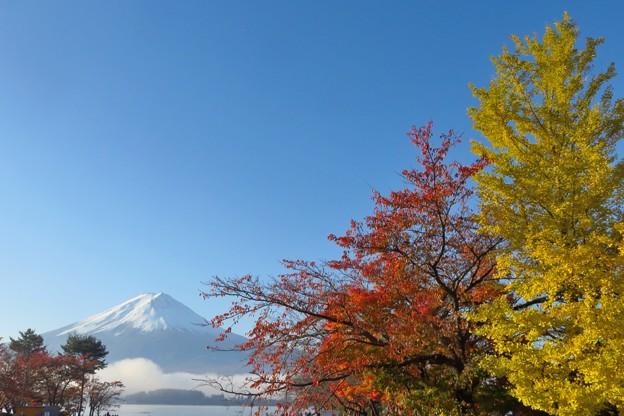写真: 赤・黄紅葉、半分青い。