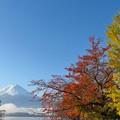 Photos: 赤・黄紅葉、半分青い。