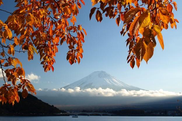 桜の葉っぱに西日さす。