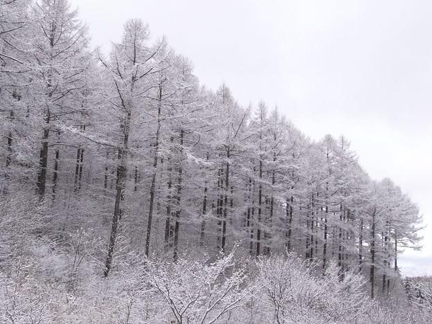 迎えた冬景色。