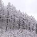 写真: 迎えた冬景色。