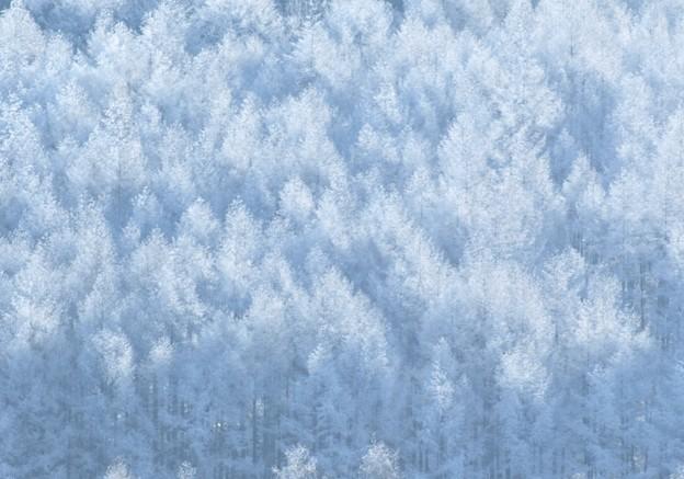 日が射す冬の森。
