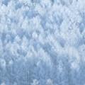 写真: 日が射す冬の森。