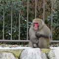通りすがりに野生猿。