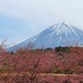 Photos: 寒桜と遥かなセスナ。