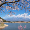 Photos: 飾る桜の田貫湖か。