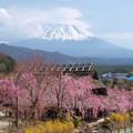 Photos: 枝垂桜に囲まれて。