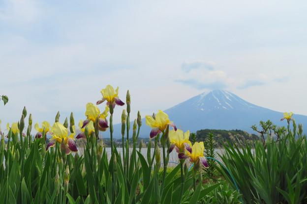Photos: 花菖蒲と空模様。