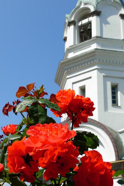 教会の赤バラ。