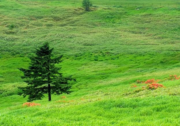 高原の涼風。
