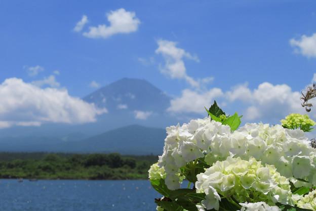 白き紫陽花と飛ぶ雲と。