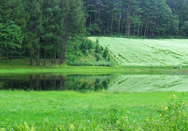 そば畑に池出現。