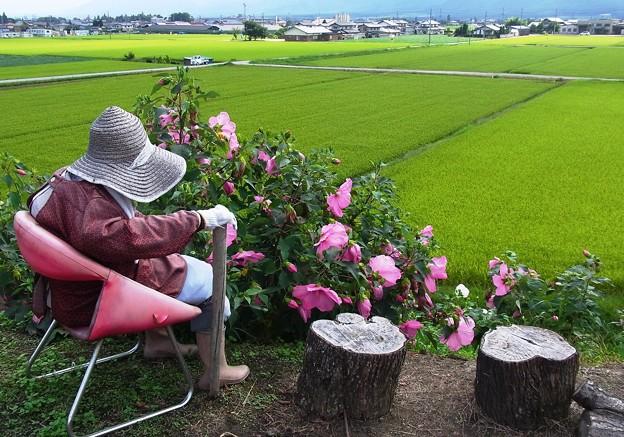 Photos: 田んぼの見張り人。