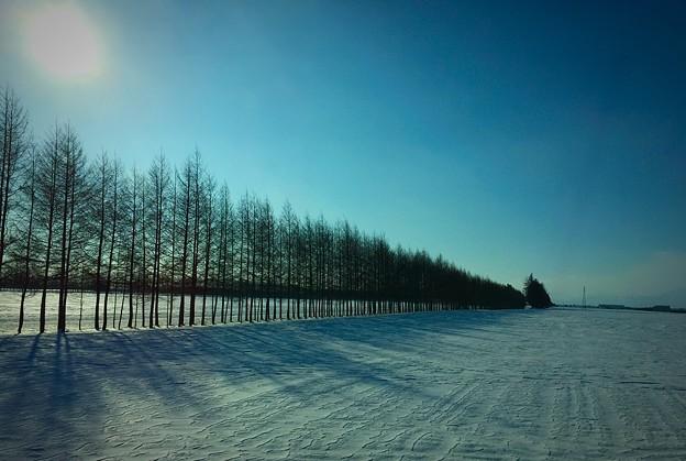 写真: 雪畑と防風林