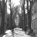 Photos: 冬の朝