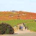 写真: みはらしの丘