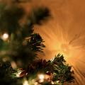 写真: 第139回 モノコン   Christmas Tree