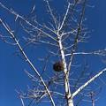 Photos: 蜂の巣