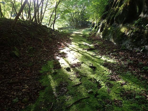 苔むした林道