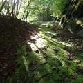 写真: 苔むした林道