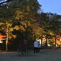 Photos: しあわせの村日本庭園