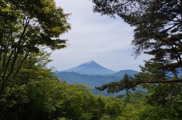 富士山を望む