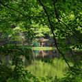 写真: さわら池