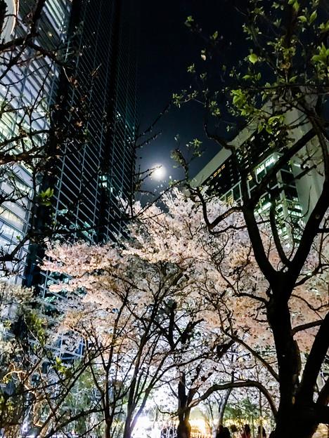 夜桜 by iPhone6S