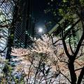 写真: 夜桜 by iPhone6S