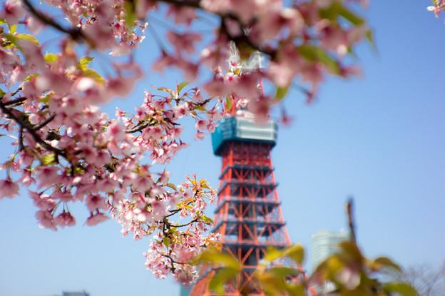 写真: ミニチュア東京タワー