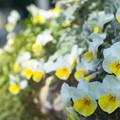 Photos: Welcome to spring
