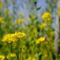 写真: Welcome to spring
