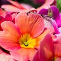 Photos: きれいに咲いたよ